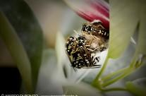 Vespe sul nido