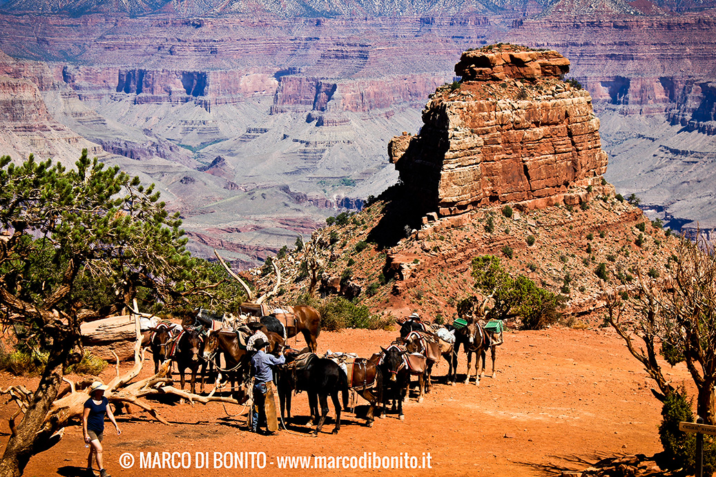 Grand Canyon 04